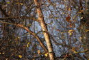 Branches | 1/250 sec | f/4.0 | 220.0 mm | ISO 320