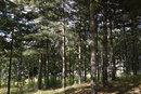 Trees PF Test   1/200 sec   f/3.2   9.0 mm   ISO 100