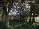 "Trees | 1/320 sec | f/3.3 | 4.5 mm | ISO 100 | <a target=""_blank"" href=""https://www.magezinepublishing.com/equipment/images/equipment/Cybershot-WX200-5019/highres/Sony-Cyber-Shot-WX200-trees-DSC00082_1365337452.jpg"">High-Res</a>"