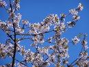 Blossom | 1/500 sec | f/5.9 | 44.5 mm | ISO 100
