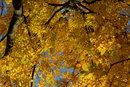 Leaves   1/250 sec   f/8.0   50.0 mm   ISO 100