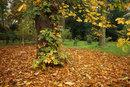 Landscape F5,6 1,40sec | 1/40 sec | f/5.6 | 30.0 mm | ISO 200