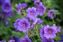 Begonias | 1/125 sec | f/5.6 | 200.0 mm | ISO 200