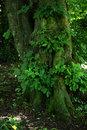 Woodland Foliage | 1/13 sec | f/5.6 | 70.0 mm | ISO 400
