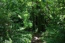 Woodland Path | 1/250 sec | f/5.6 | 70.0 mm | ISO 3200