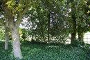 Trees | 1/50 sec | f/4.0 | 18.0 mm | ISO 100