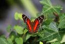 Butterfly | 1/250 sec | f/5.6 | 135.0 mm | ISO 2000