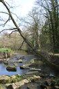 Trees River | 1/100 sec | f/6.3 | 18.0 mm | ISO 100