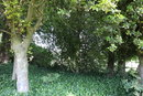 Trees   1/40 sec   f/4.5   24.0 mm   ISO 100