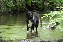 Dog In Water | 1/200 sec | f/5.6 | 135.0 mm | ISO 4000