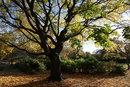 Yellow Tree | 1/250 sec | f/6.3 | 15.0 mm | ISO 100