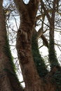 Trees | 1/100 sec | f/5.6 | 35.0 mm | ISO 100