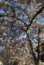 """Blossom Tree 