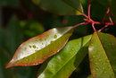 Close Up Leaf | 1/500 sec | f/6.3 | 135.0 mm | ISO 100