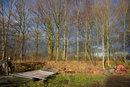 Trees In Winter | 1/125 sec | f/8.0 | 24.0 mm | ISO 100