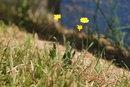 Flowers 560mm | 1/500 sec | f/5.6 | 560.0 mm | ISO 125