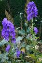 Purple Flowers | 1/50 sec | f/8.0 | 50.0 mm | ISO 200