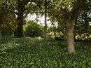 Trees   1/125 sec   f/3.4   4.3 mm   ISO 125