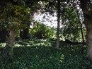 Trees   1/80 sec   f/3.9   5.0 mm   ISO 100