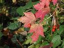Leaves   1/300 sec   f/4.9   25.0 mm   ISO 200