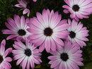 Flowers | 1/420 sec | f/6.2 | 5.0 mm | ISO 100