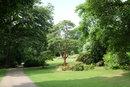 Tree  | 1/240 sec | f/5.6 | 27.0 mm | ISO 400