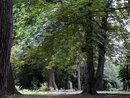 Astley Woodland   1/13 sec   40.0 mm   ISO 400