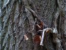 Gnarley Tree   1/5 sec   40.0 mm   ISO 200