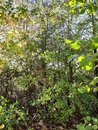 Trees| 1/190 sec | f/1.7 | 3.9 mm | ISO 40