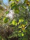 Tress (into sun) | 1/395 sec | f/1.7 | 3.9 mm | ISO 40