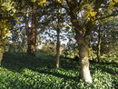 "Trees   1/100 sec   f/4.0   4.1 mm   ISO 100   <a target=""_blank"" href=""https://www.magezinepublishing.com/equipment/images/equipment/Galaxy-Camera-4784/highres/samsung-galaxy-camera-trees_1355149163.jpg"">High-Res</a>"