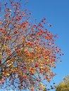 Tree Zoom | 1/251 sec | f/2.4 | 6.0 mm | ISO 25