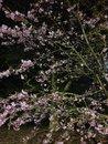 Blossom Night   1/9 sec   f/1.5   4.3 mm   ISO 1000