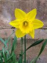 Daffodil | 1/100 sec | f/2.4 | 4.3 mm | ISO 64