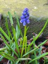 Flower | 1/100 sec | f/2.4 | 4.3 mm | ISO 160