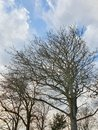 Trees | 1/359 sec | f/2.4 | 4.3 mm | ISO 50