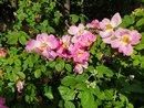 Flowers   1/2416 sec   f/2.4   4.3 mm   ISO 50
