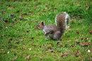 Squirrel | 1/3200 sec | f/6.3 | 300.0 mm | ISO 6400