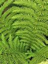 Leaves (Digital zoom) | 1/337 sec | f/1.8 | 4.0 mm | ISO 50