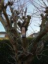Tree | 1/279 sec | f/1.8 | 3.5 mm | ISO 50