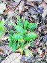 Plant (AI) | 1/33 sec | f/1.8 | 3.5 mm | ISO 200