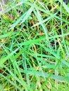 Grass (AI) | 1/100 sec | f/1.8 | 3.5 mm | ISO 400