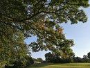 Park Tree Leaves | 1/504 sec | f/2.2 | 4.0 mm | ISO 50