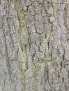 Bark | 1/50 sec | f/2.2 | 3.8 mm | ISO 160