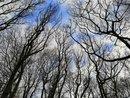 Trees | 1/531 sec | f/2.2 | 3.8 mm | ISO 50