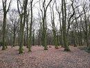Trees | 1/50 sec | f/2.2 | 3.8 mm | ISO 64