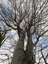 Trees Sky | 1/151 sec | f/2.2 | 3.8 mm | ISO 50