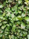 Hedge | 1/50 sec | f/1.8 | 4.8 mm | ISO 250