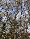 Trees | 1/502 sec | f/1.8 | 4.8 mm | ISO 50
