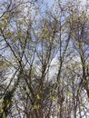 Trees | 1/487 sec | f/1.8 | 4.8 mm | ISO 50